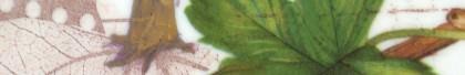 Natura Viva Series Feature Image